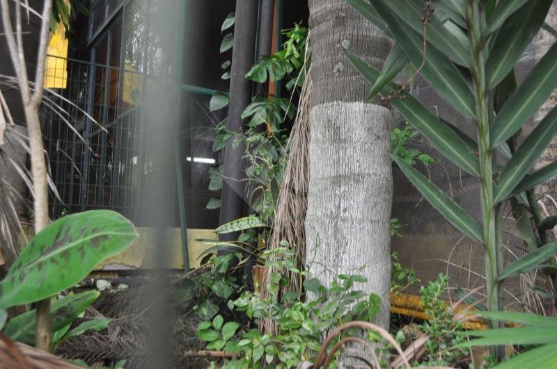 Prédio Inteiro em Vila Ida, São Paulo - SP